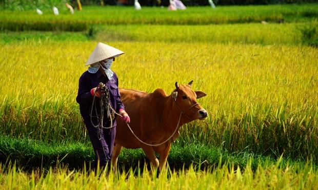 Hoi An: The best city on earth - Ảnh minh hoạ 10